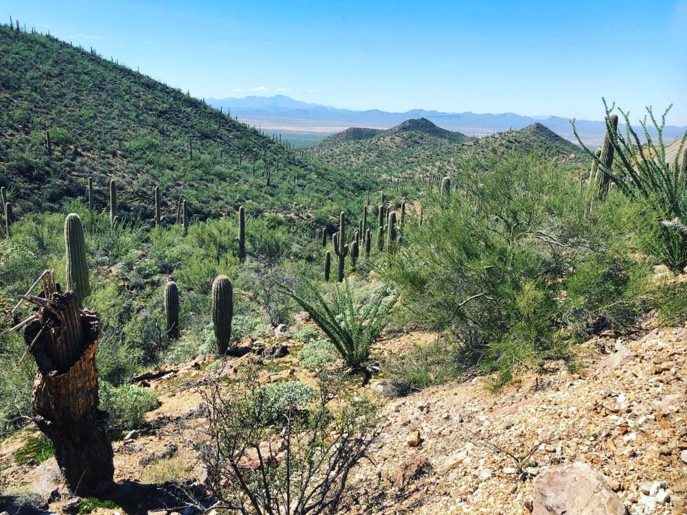 Tucson3